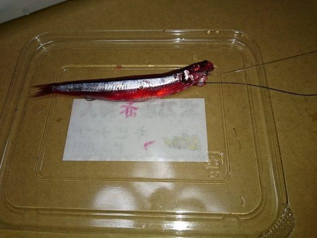 赤キビナゴ