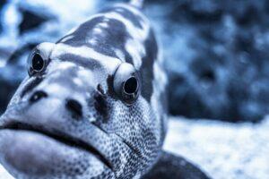 ぱくたそ・根魚画像