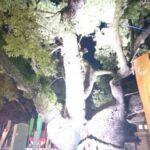 本殿横の木