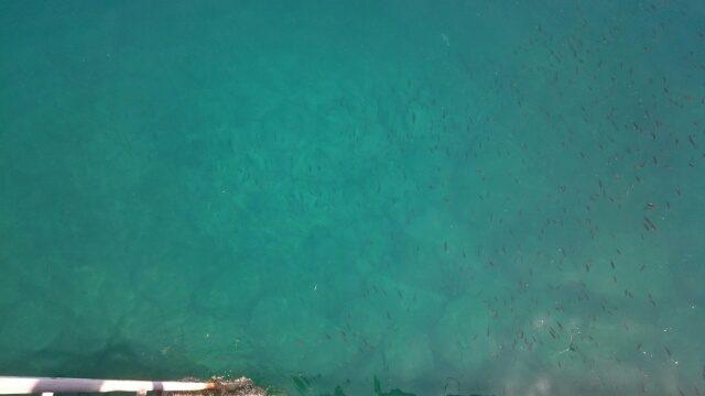 海底まで見える下津ピアーランド