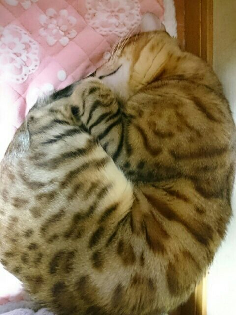 暖かマットで爆睡する愛猫リン