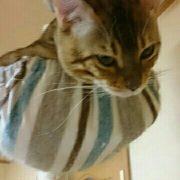 猫タワー最上部に逃げ込むリン
