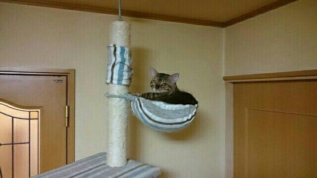 避難中の愛猫リン・別角度